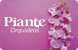 Orquídeas Piante