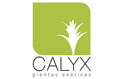 Calyx SS