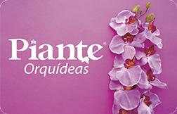 Piante Orquídeas
