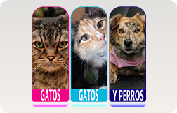 Gatos Gatos y Perros