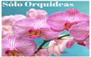 Sólo Orquideas