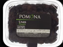 Uva Pasa Pomona