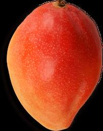 Mango Tommy Fresco