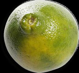 Naranja Tangelo Mineola