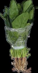 Espinaca Paquete 1 U