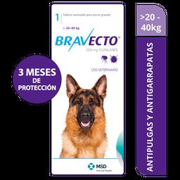 Bravecto 20 - 40 Kg Azul
