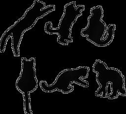 Set Imanes X 6 Gatos Negro