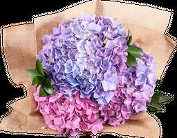 Bouquet de Hortensias