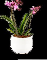 Orquídea mini con matera en cerámica