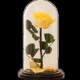 Rosa Encantada Premium Amarilla