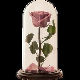 Rosa Encantada Premium Lila