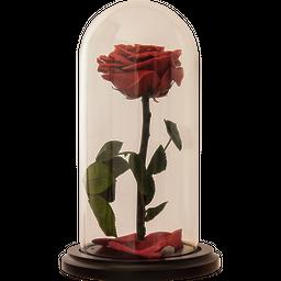 Rosa Encantada Premium Mora