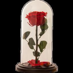 Rosa Encantada Premium Roja