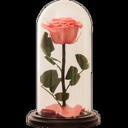 Rosa Encantada Premium Rosado Azúcar