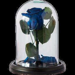 Rosa Encantada Mini Azul Noche