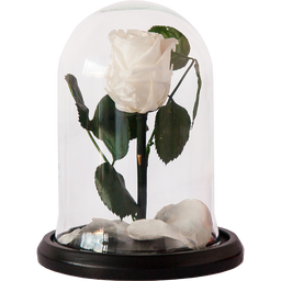 Rosa Encantada Mini Blanca