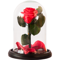 Rosa Encantada Mini Fucsia