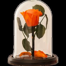 Rosa Encantada Mini Naranja