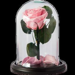 Rosa Encantada Mini Rosa Claro