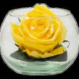 Pecera Mini Amarilla