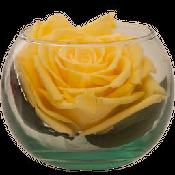 Pecera Premium Amarilla