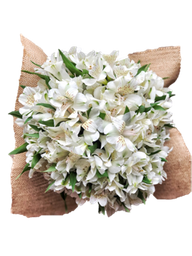 Bouquet de Alstros Blancas