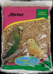 AVENA PENTAGRAMA 250 GR