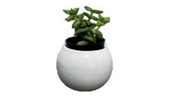 Cactus - Planta cactus