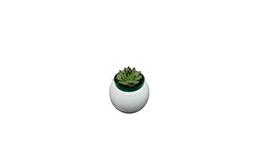 Suculenta 1 - Planta suculenta