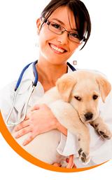 Consulta veterinaria básica