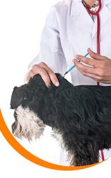 Vacunas Pentavalentes para Perros y Gatos