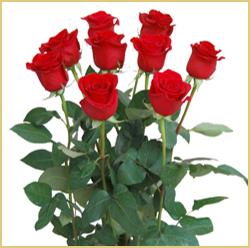12 Rosas De Exportacion