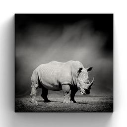 Cuadro Lienzo Rhino