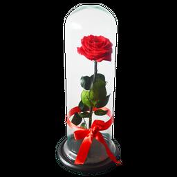 Rosa Preservada Roja - Rosa Preservada
