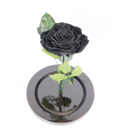 Rosa Negra Premium en Urna 1 U