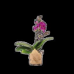 Orquídea Mini Decor