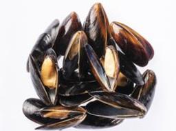 Mejillones Negros Paquete