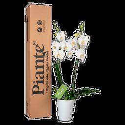 Orquídea blanca supreme con matera plástica