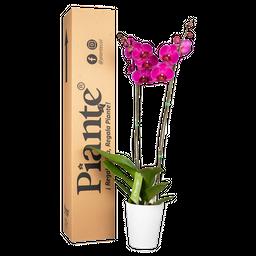 Orquídea morada supreme con matera plástica
