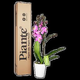 Orquídea rosada supreme con matera plastica