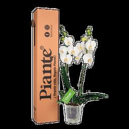 Orquídea blanca supreme decor