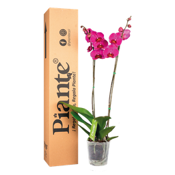 Orquídea morada supreme decor
