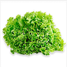 Lechuga Crespa Verde Hidroponica 250 g