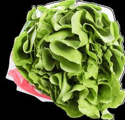 Lechuga Hidropónica Verde Lisa