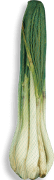 Cebolla Larga Malla