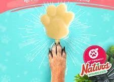 Mango Paletas para Mascotas